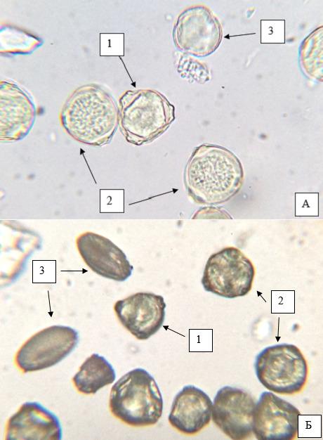 Микропрепараты пыльцы
