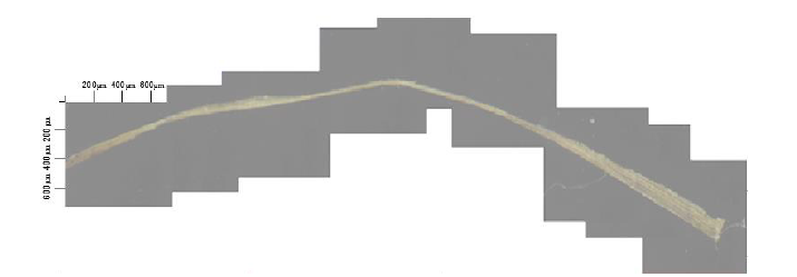Световая микроскопия льняного волокна